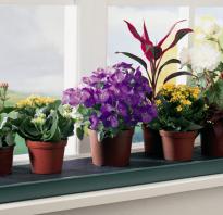 Бизнес на выращивании растений