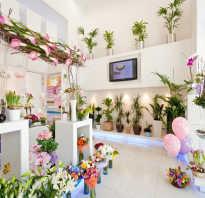 Дизайн цветочного магазина